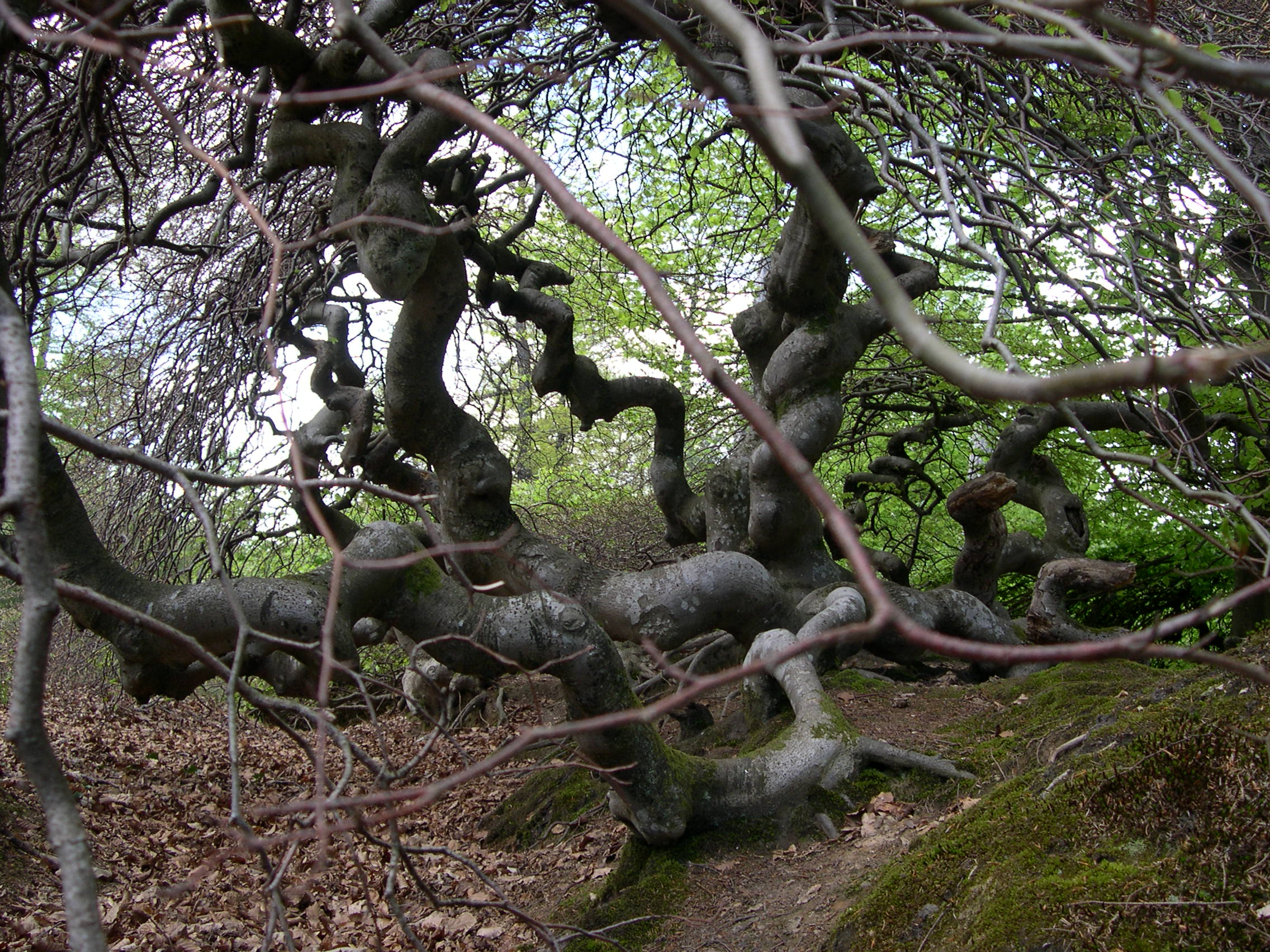 balade aux faux de verzy dans la nature